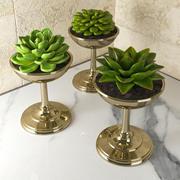 Vetplanten 3d model