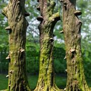 现实树模型3 3d model
