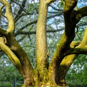 Отсканированное дерево, фотореалистичная ссылка 3d model