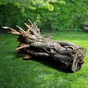 Realistyczny model korzeni drzew 6 3d model