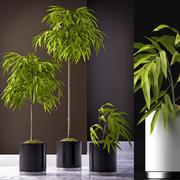榕榕植物65 3d model