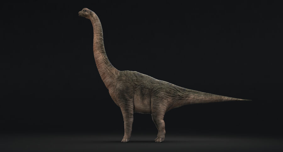 Brachiosaurus royalty-free 3d model - Preview no. 4
