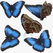 Blue Morpho Butterfly 5 Poses 3d model