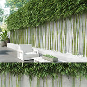 Trimmed Bamboos (+GrowFX) 3d model