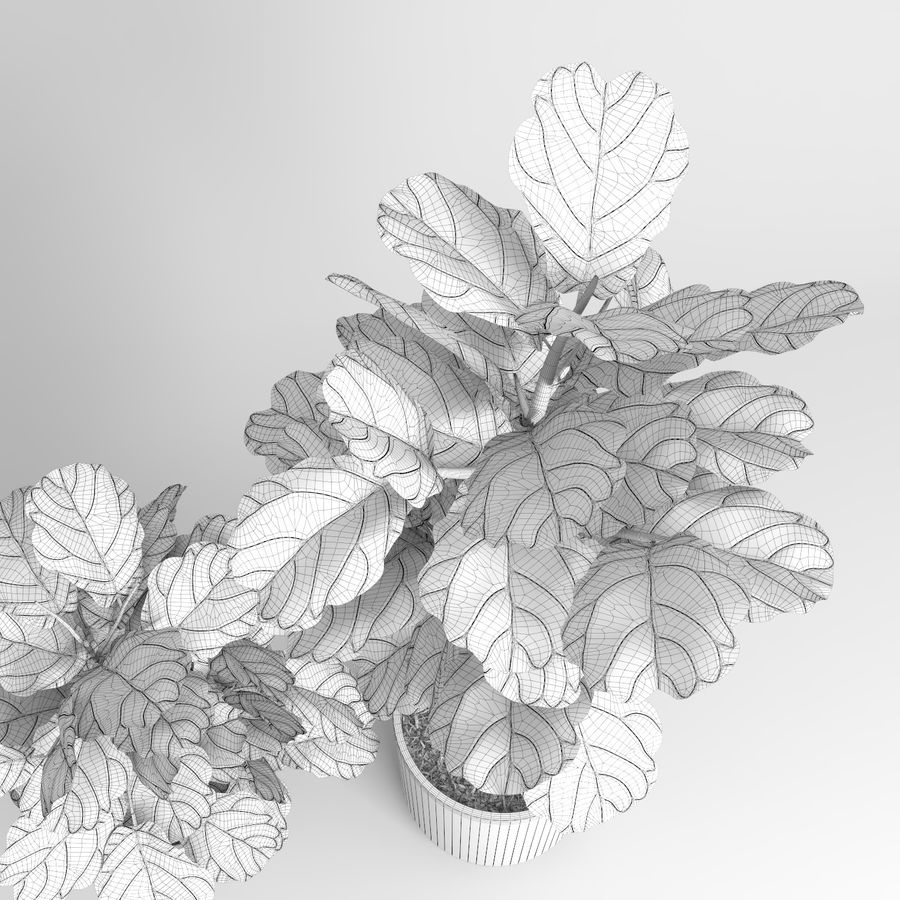 Ficus Lyrata Trees (+ GrowFX) royalty-free 3d model - Preview no. 12