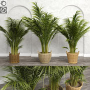 Areca palmbomen (+ GrowFX) 3d model
