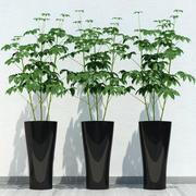 rum planta 10 3d model
