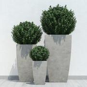 växter 13 3d model