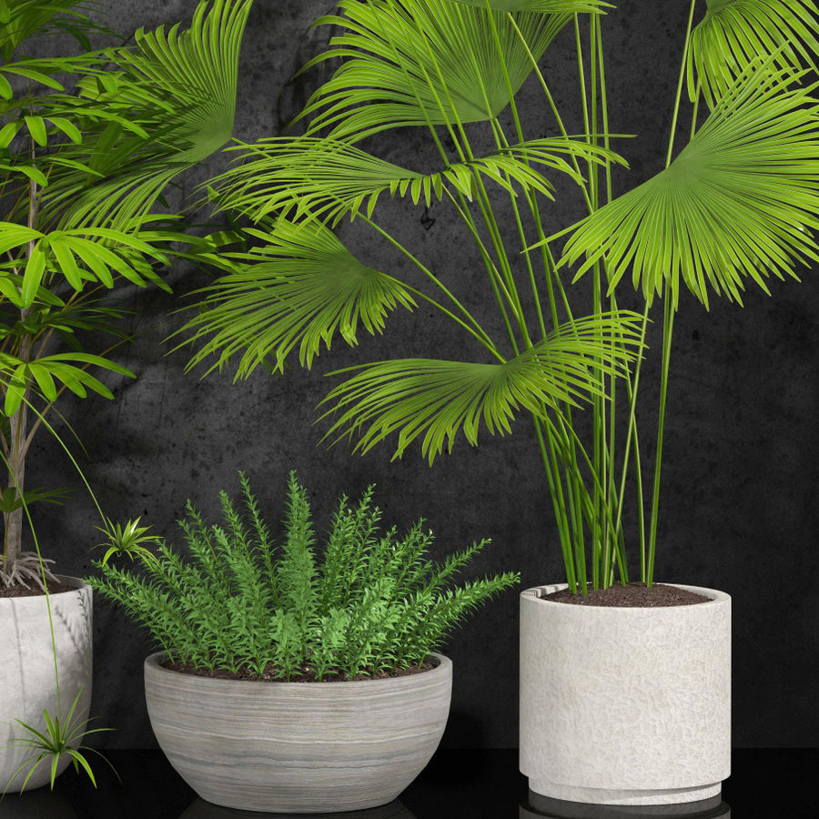 room plants royalty-free 3d model - Preview no. 3