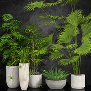 room plants 3d model