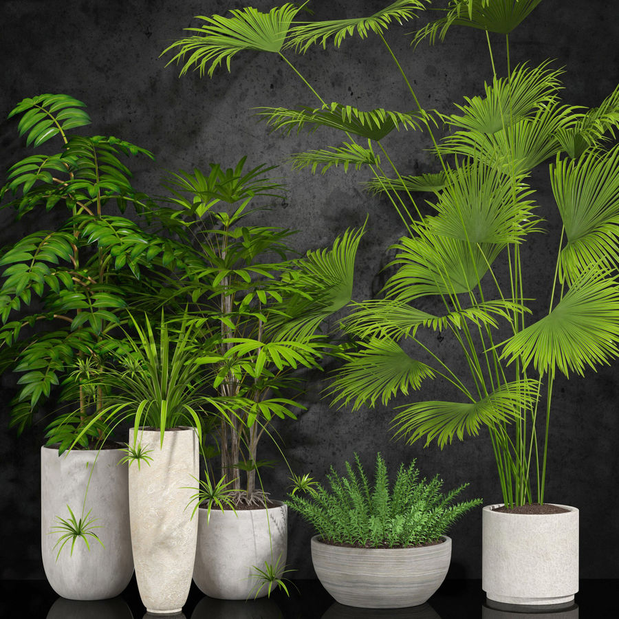 room plants royalty-free 3d model - Preview no. 1