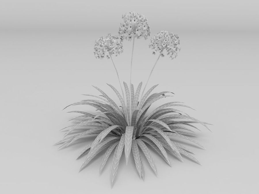 AGAPANTHUS AFRICANUS royalty-free 3d model - Preview no. 2
