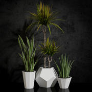 rośliny pokojowe 03 3d model