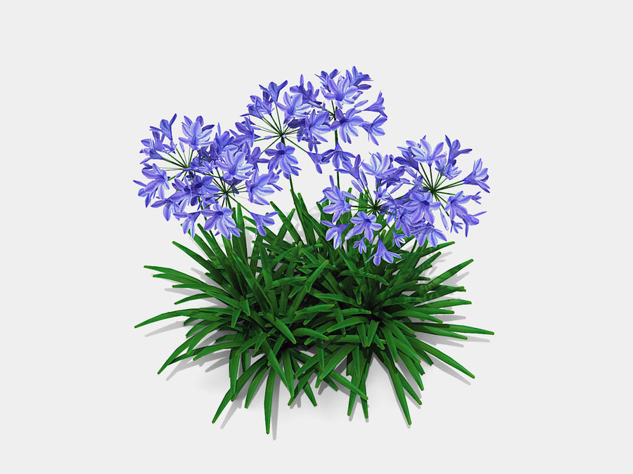 Agapanthus Monmid Flower (326) royalty-free 3d model - Preview no. 3