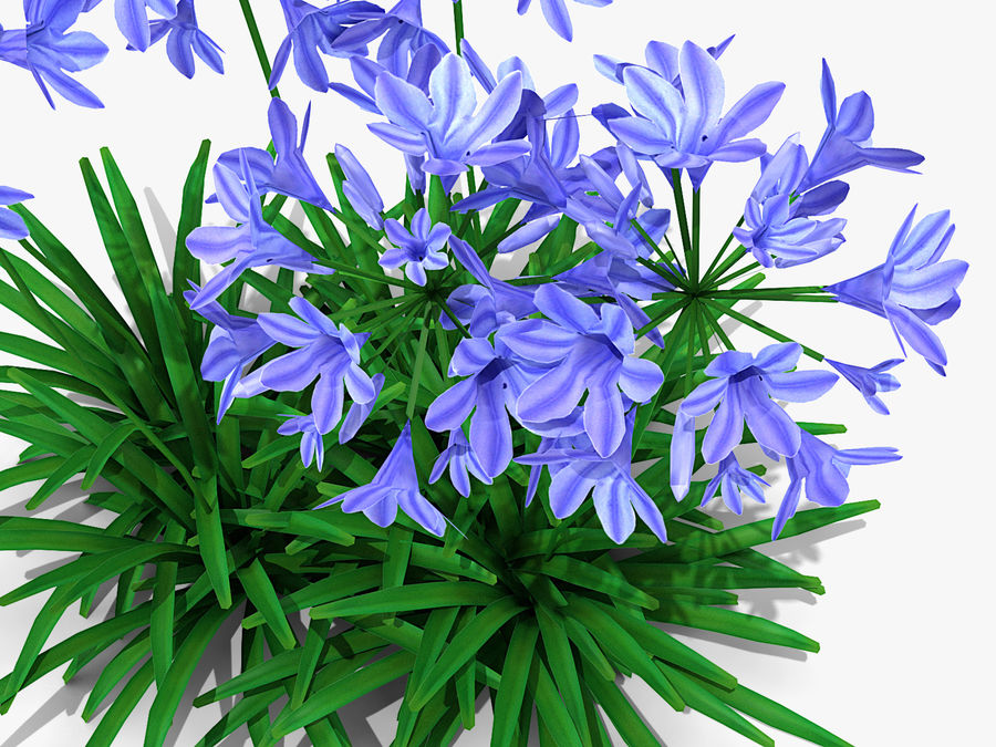 Agapanthus Monmid Flower (326) royalty-free 3d model - Preview no. 5