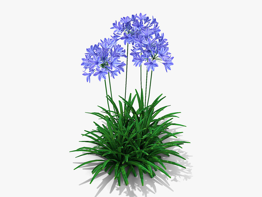 Agapanthus Monmid Flower (326) royalty-free 3d model - Preview no. 1