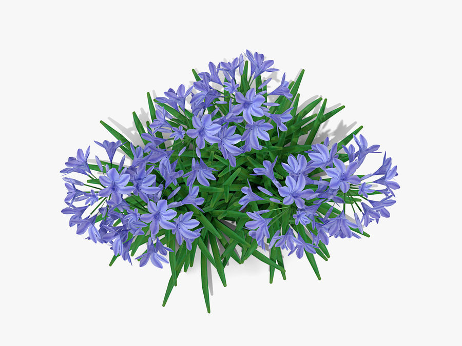 Agapanthus Monmid Flower (326) royalty-free 3d model - Preview no. 6