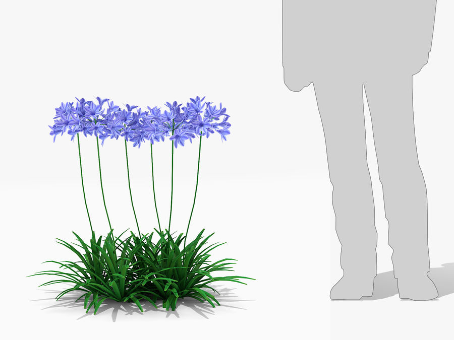 Agapanthus Monmid Flower (326) royalty-free 3d model - Preview no. 7