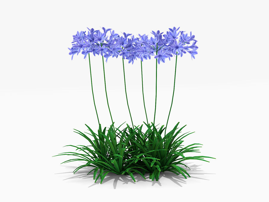 Agapanthus Monmid Flower (326) royalty-free 3d model - Preview no. 4