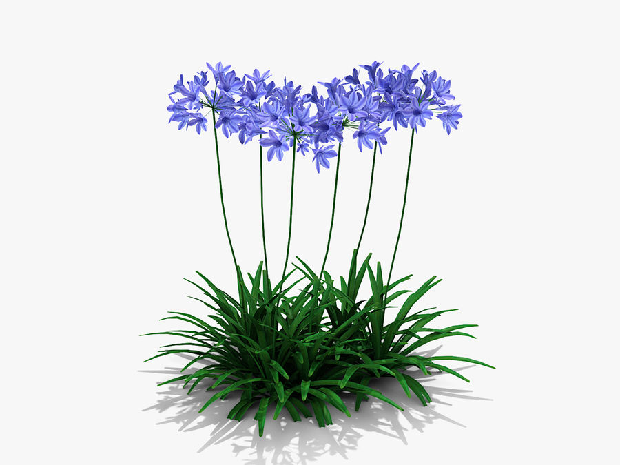 Agapanthus Monmid Flower (326) royalty-free 3d model - Preview no. 2
