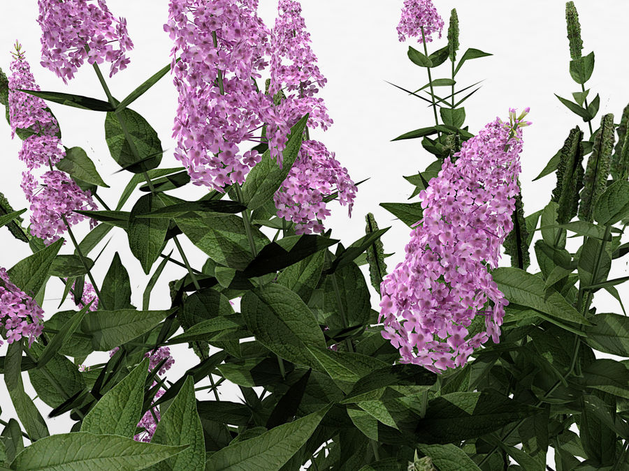 Pink Delight Butterfly Bush (359) royalty-free 3d model - Preview no. 5