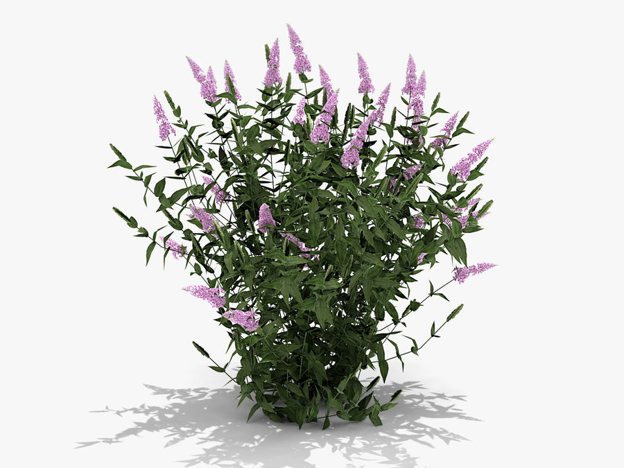 Pink Delight Butterfly Bush (359) royalty-free 3d model - Preview no. 1