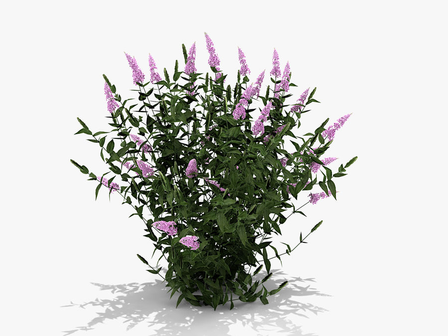 Pink Delight Butterfly Bush (359) royalty-free 3d model - Preview no. 2