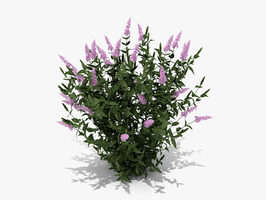 Pink Delight Butterfly Bush (359) royalty-free 3d model - Preview no. 3