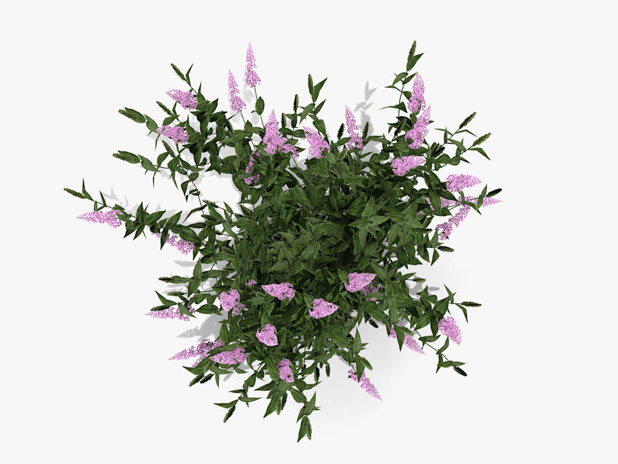 Pink Delight Butterfly Bush (359) royalty-free 3d model - Preview no. 4
