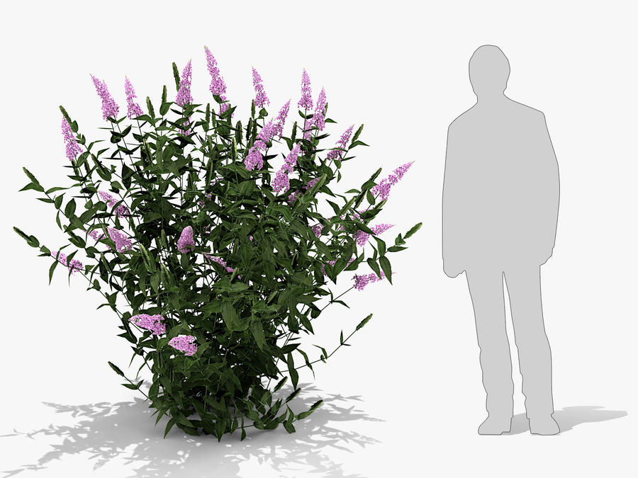 Pink Delight Butterfly Bush (359) royalty-free 3d model - Preview no. 7