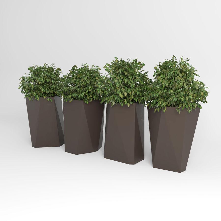 Plantas para interior y exterior 2 royalty-free modelo 3d - Preview no. 5