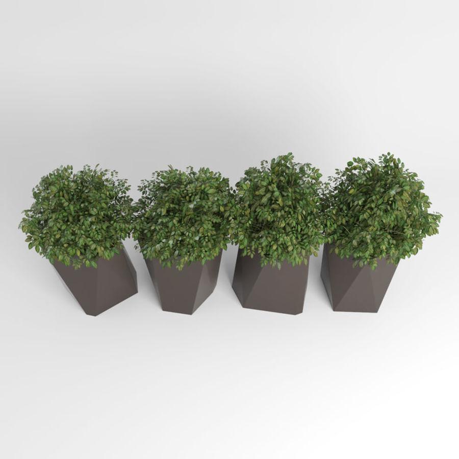 Plantas para interior y exterior 2 royalty-free modelo 3d - Preview no. 6