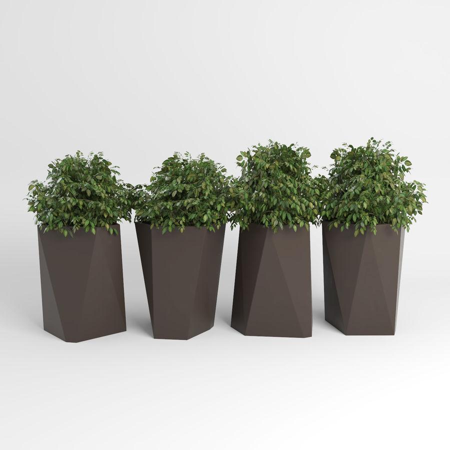Plantas para interior y exterior 2 royalty-free modelo 3d - Preview no. 4
