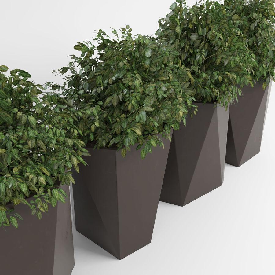 Plantas para interior y exterior 2 royalty-free modelo 3d - Preview no. 3