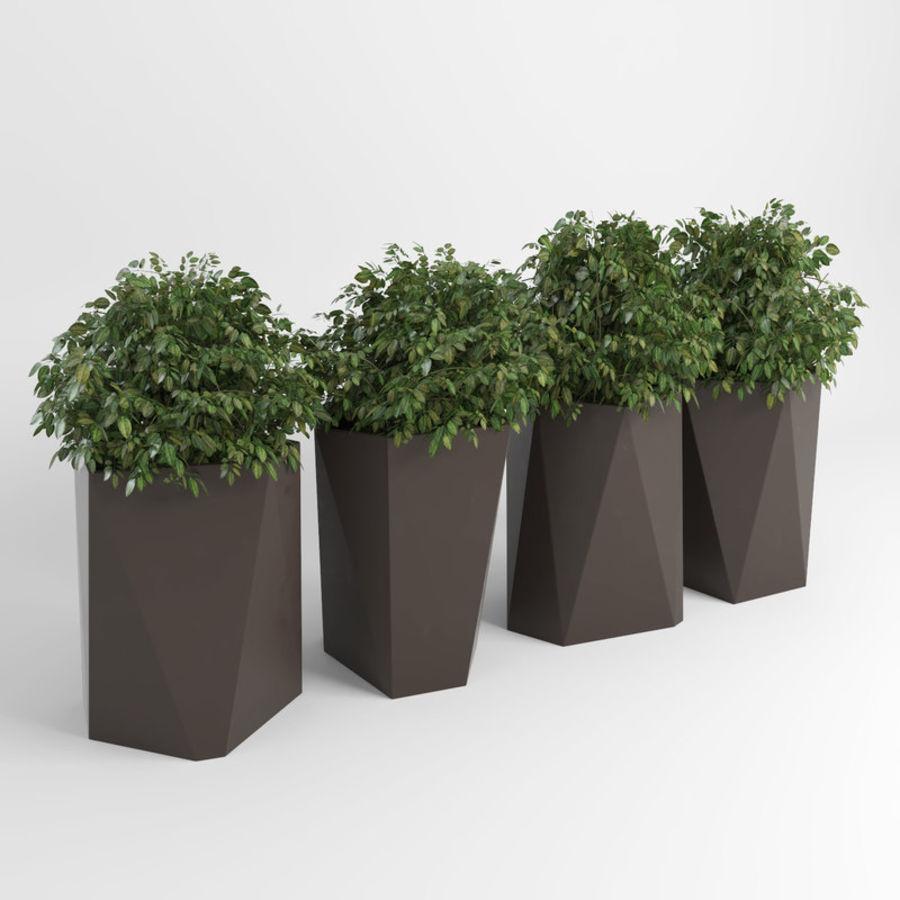Plantas para interior y exterior 2 royalty-free modelo 3d - Preview no. 2