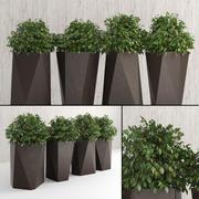 室内和室外植物2 3d model