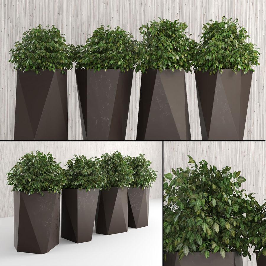 Plantas para interior y exterior 2 royalty-free modelo 3d - Preview no. 1
