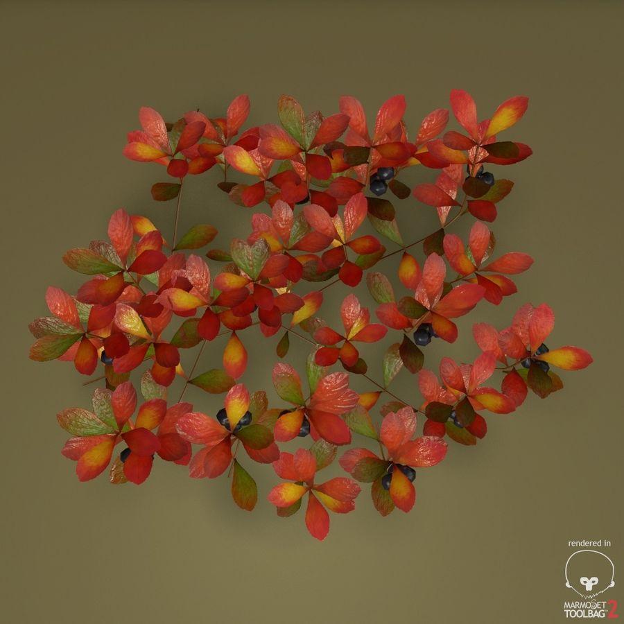 ベアベリー royalty-free 3d model - Preview no. 4