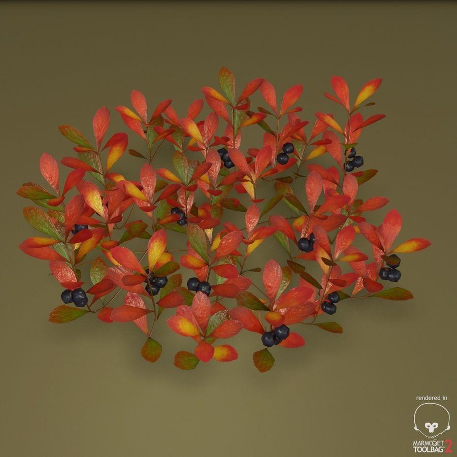 ベアベリー royalty-free 3d model - Preview no. 3