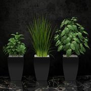 rum planta 08 3d model
