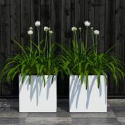 roślina 15 3d model