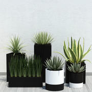Pflanze 14 Aloe 3d model