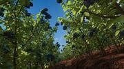 Blueberry Field 3d model
