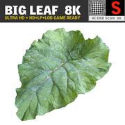 BIG LEAF 8K Ultra HD 3d model