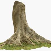 Tropical Tree 2 3D Scan 3d model