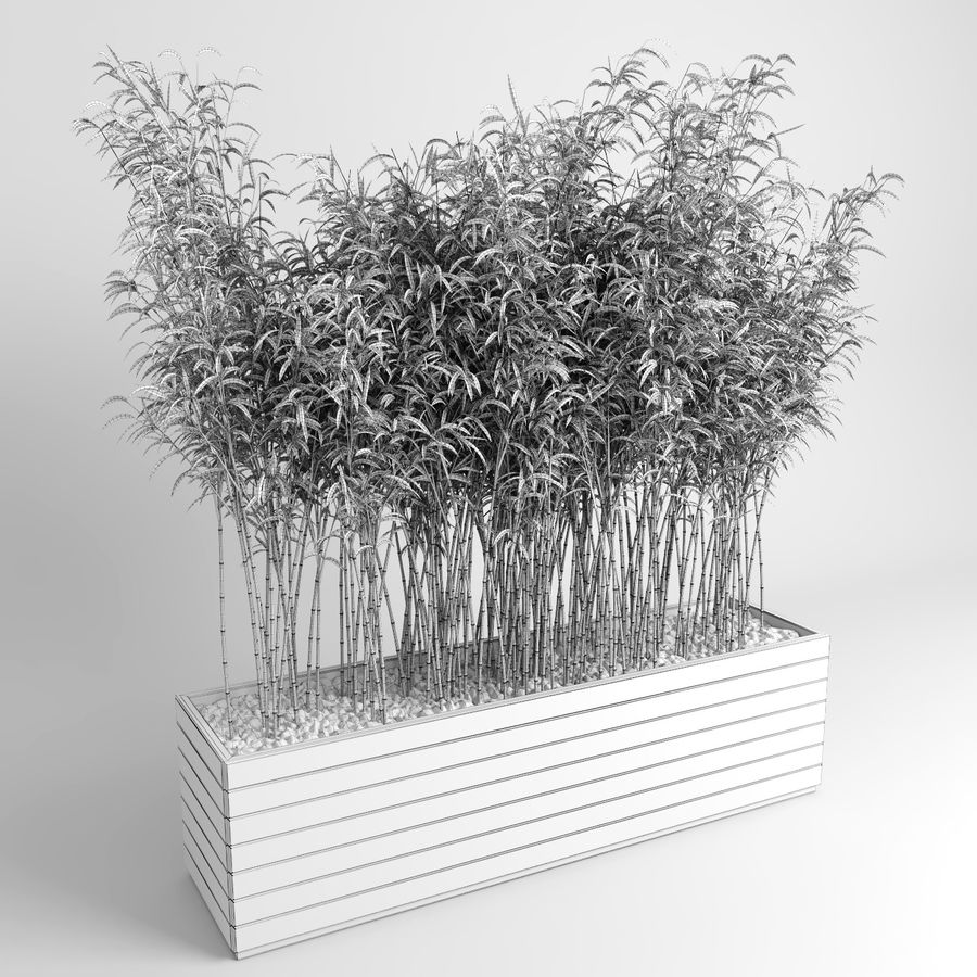 Bambúes paraguas (+ GrowFX) royalty-free modelo 3d - Preview no. 8