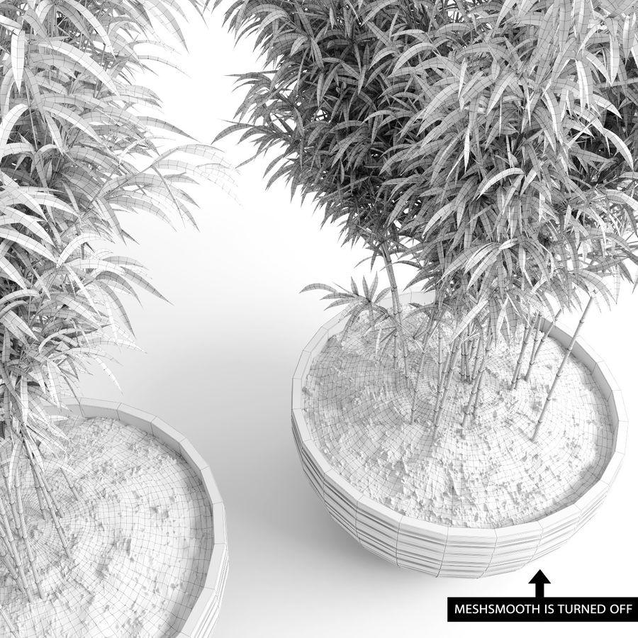 Bambúes paraguas (+ GrowFX) royalty-free modelo 3d - Preview no. 20