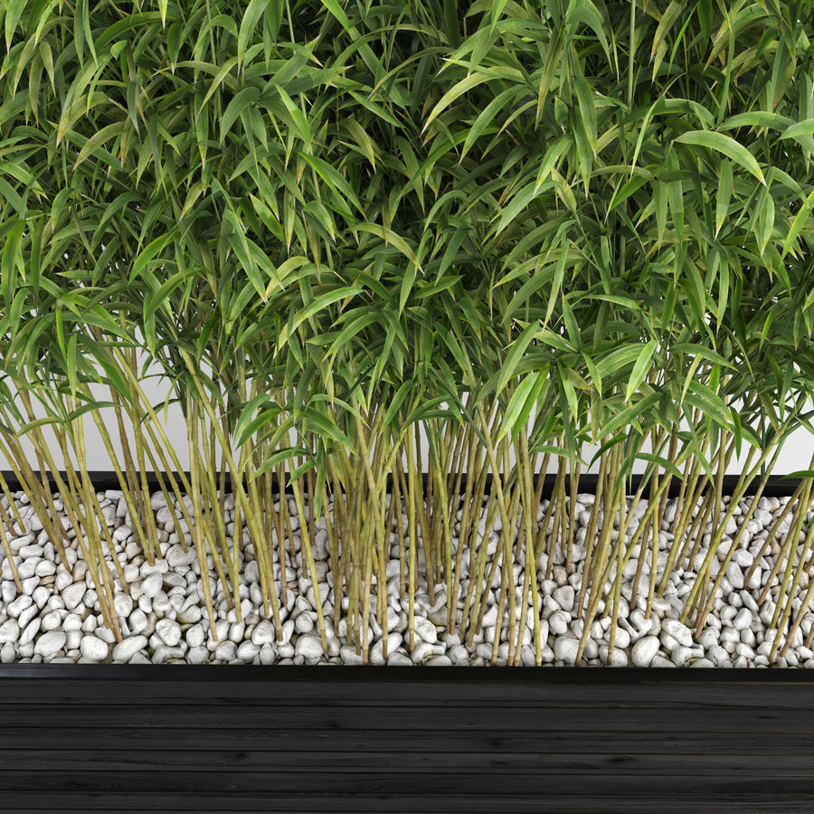 Plantas de bambú (Fargesia Murielae) royalty-free modelo 3d - Preview no. 9