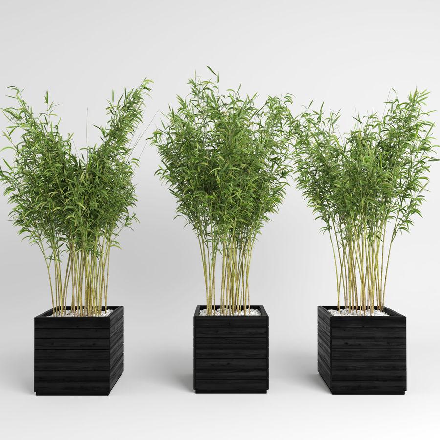 Plantas de bambú (Fargesia Murielae) royalty-free modelo 3d - Preview no. 7