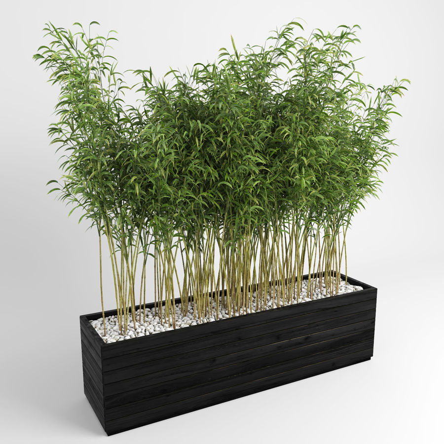 Plantas de bambú (Fargesia Murielae) royalty-free modelo 3d - Preview no. 2